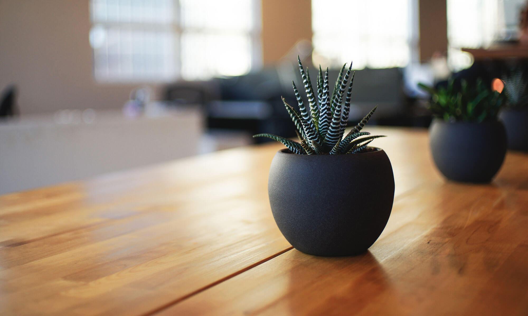 Planteservice og haveservice